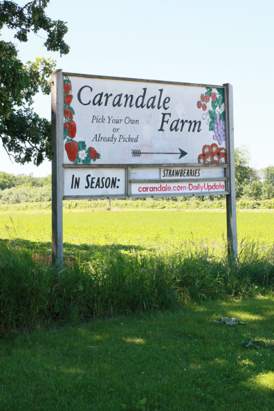 Strawberry Picking at Carandale Farm | Perpetually Chic